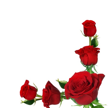 border flowers: roses frame