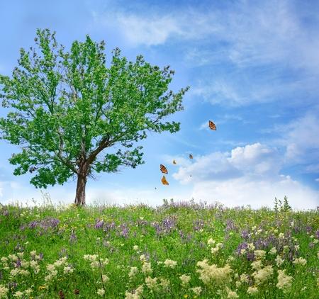 oak tree on the flower field  photo