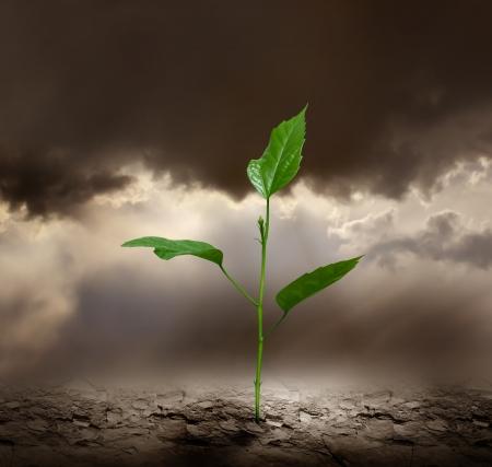 Plant groeit trog dode grond.