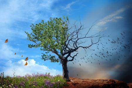 calentamiento global: árboles vivos y muertos