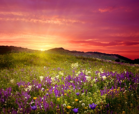 colorful cloudscape: Mountain landscape with flowers  Stock Photo