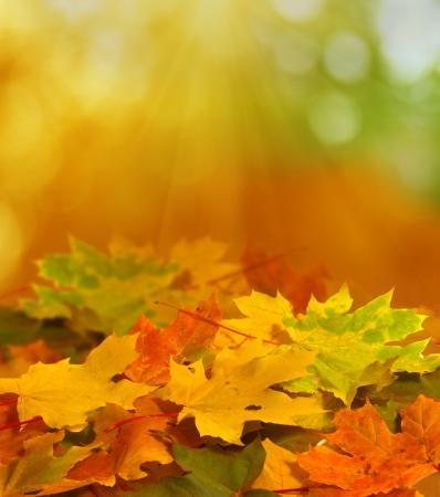 autumn colour: autumn background Stock Photo