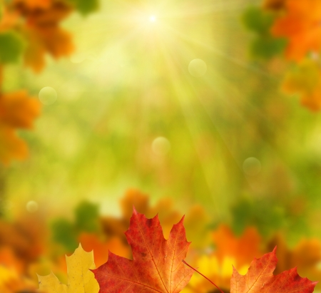 organic background: autumn background