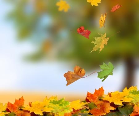 táj: őszi levelek Stock fotó