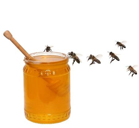 bee swarm: honey concept