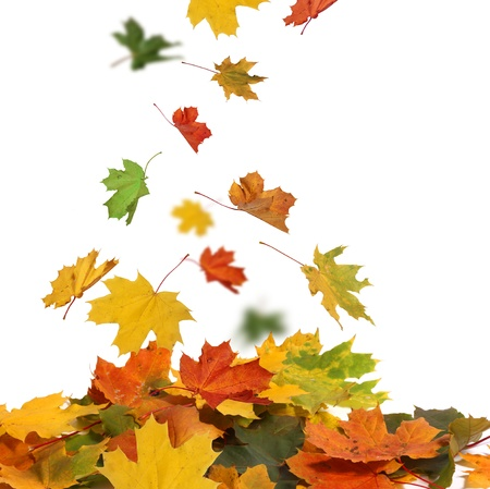 Isolated Autumn Leaves Stock Photo - 15220408