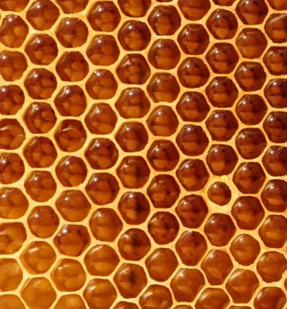 honeybee: honeycomb background