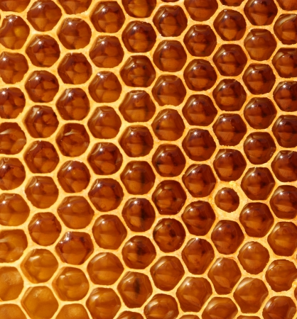 abejas panal: panal fondo