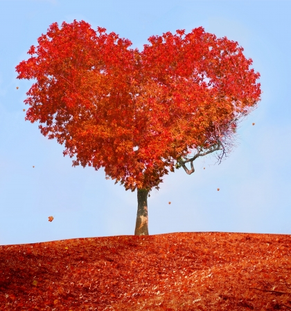 autumn in the park: Tree of love Stock Photo