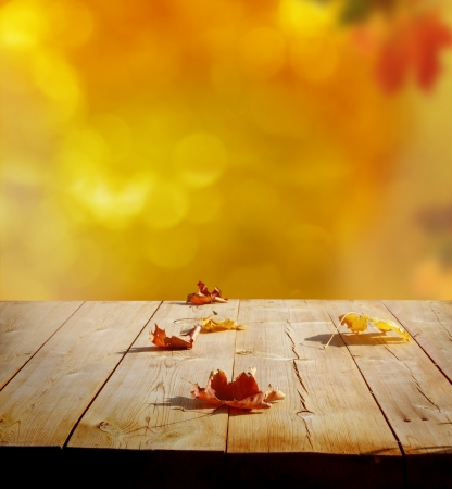 oak wood: autumn background Stock Photo