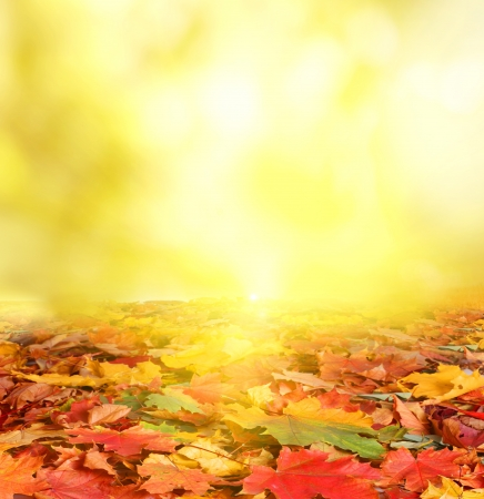 the dry leaves: oto�o fondo