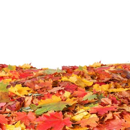 autumn leaves Stock Photo - 15884215