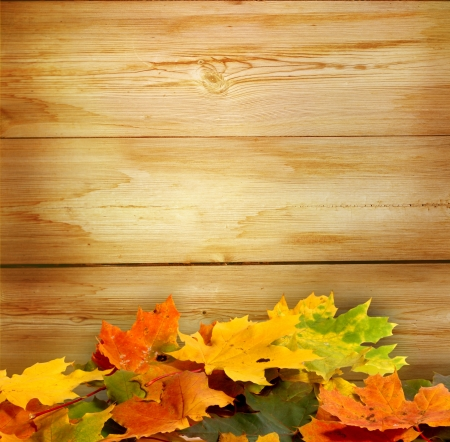 walnut tree: autumn background Stock Photo