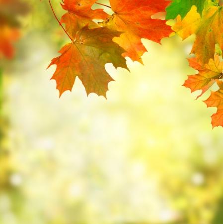 hojas secas: oto�o fondo