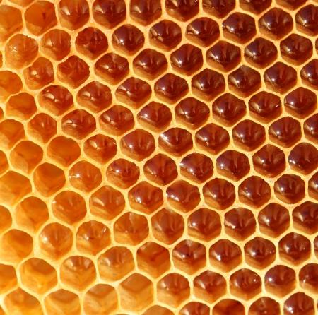 syrupy: honeycomb Stock Photo