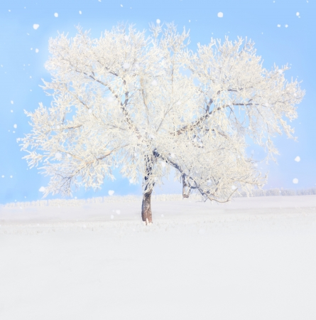 winter tree  photo