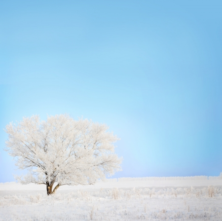 frost covered: winter tree