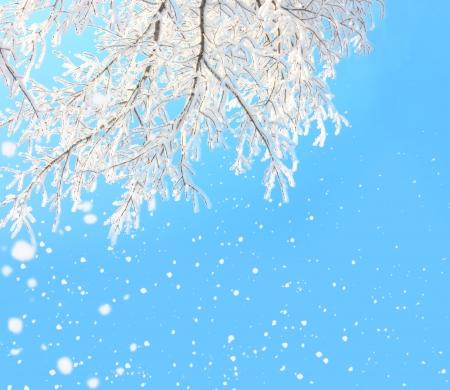winter background photo