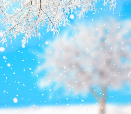 winter background photo