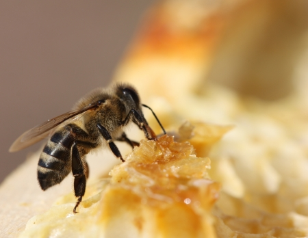 honey comb and a bee working Stock Photo - 17361837