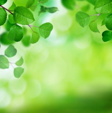 apfelbaum: Frühling Hintergrund