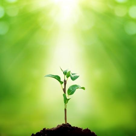 medio ambiente: Nueva vida