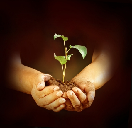 hands holding tree: New life in hands
