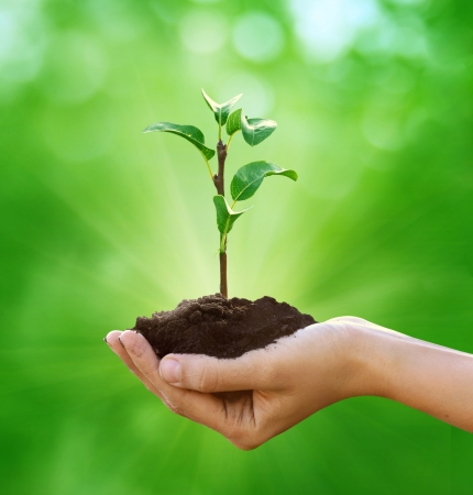 hands holding earth: New life in hand  Stock Photo