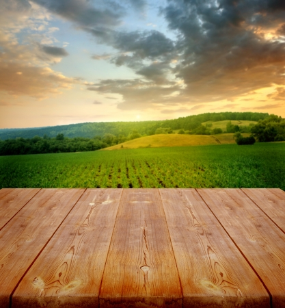 corn stalk: summer background with wooden planks