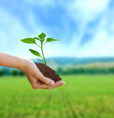 environmental problems: New life in hand  Stock Photo