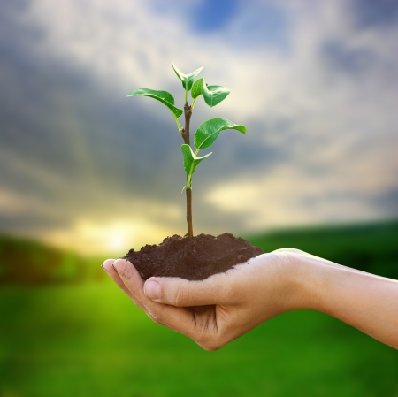 agricultural life: New life in hand  Stock Photo