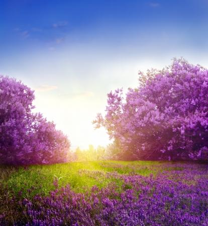 Landschap: lente landschap