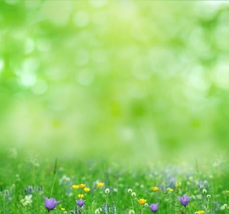 green background: summer background
