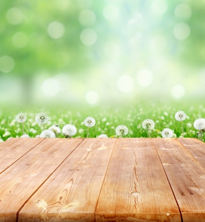spring background with wooden planks  photo
