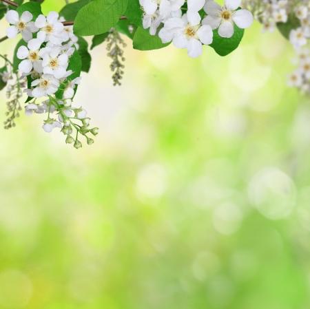green: nền mùa xuân