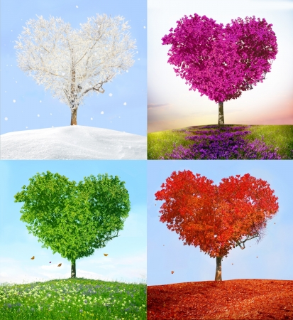 beautiful scenery: Tree of love in for season