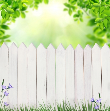summer background with fence Stock Photo