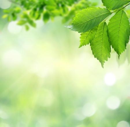 albero di mele: estate sfondo