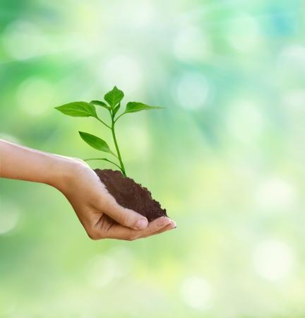 arbol de problemas: Nueva vida en la mano