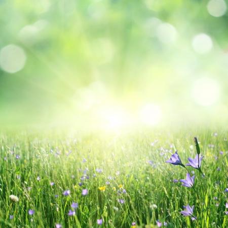 luz solar: fundo do ver