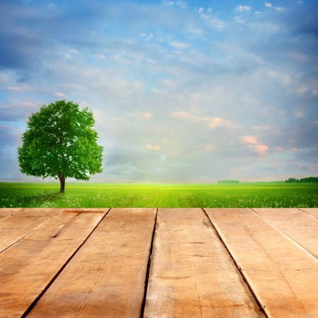 summer background with wooden planks  photo