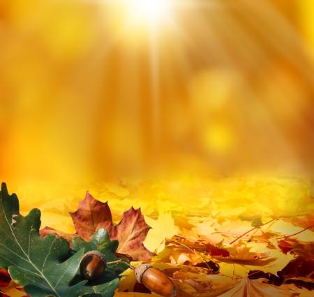 Herbst Hintergrund Standard-Bild - 21927359
