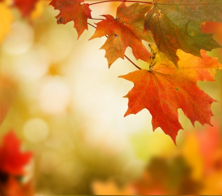 autumn background  Stock Photo - 21927370