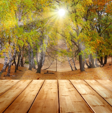 autumn background  with wooden planks  photo