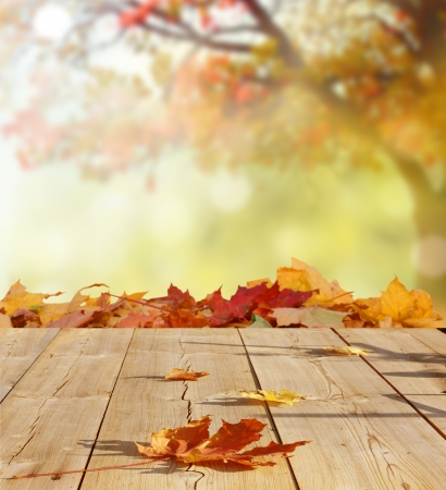 autumn in the park: autumn background Stock Photo