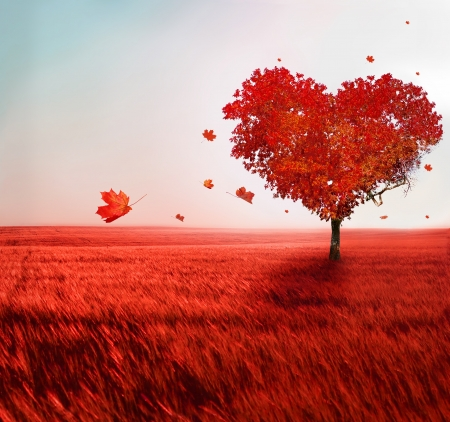fall scenery: Tree of love  Stock Photo