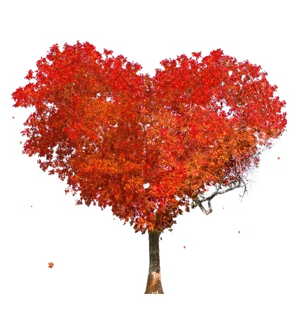 Tree of love on white background photo