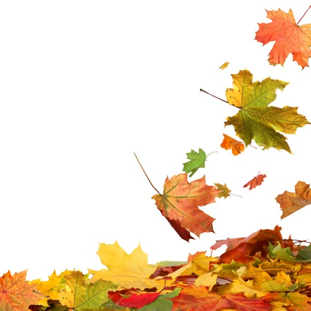 autumn leaves: Isolated autumn leaves Stock Photo
