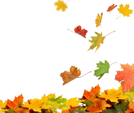 tree in autumn: Isolated autumn leaves Stock Photo