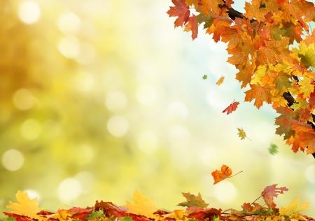 autumn background Stock Photo - 21927391